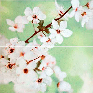 EARLY SPRING PANNO FLOWER 59,4X60
