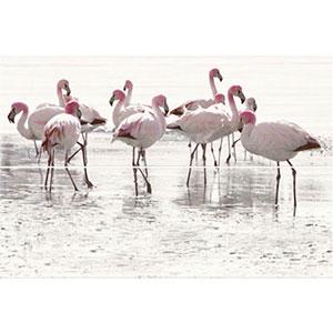Elegant stripes panno flamingo 50X75