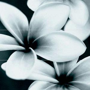 FLOWER GREY COMPOSITION 75X75